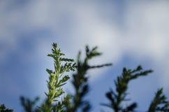 Överkant för grön växt i natore med bakgrund- och bakgrundssuddighet för bakgrundsbruk arkivfoton