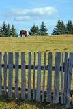 överkant för quiet för hästliggandeberg arkivbild