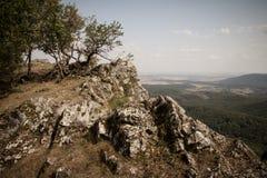 Överkant för stenigt berg med träd royaltyfri fotografi