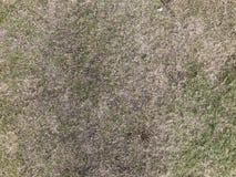 Överkant ner sikt av ensamt torrt gräs royaltyfria foton