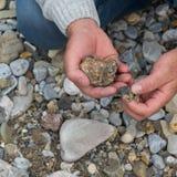 Överkant ner sikten av manhanden som forskar mineraler Geologisk ockupation i naturen royaltyfri fotografi