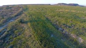 Överkanten av kullar som täckas i frodigt grönt gräs, den nya ängen för, betar, antennskottet arkivfilmer