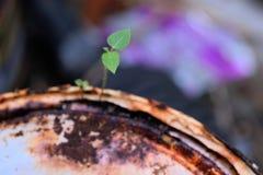 Överlevnad av unga växter som växer royaltyfria foton