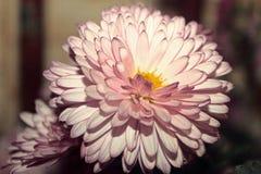 ÖVERRASKA! Så trevliga blommor royaltyfria foton