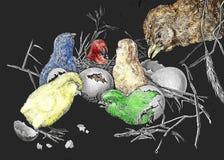 Överraskningen Kläcka av de lilla fågelungarna Fotografering för Bildbyråer
