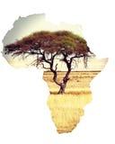 Översikt av africa det återhållsamma begreppet med akacian Royaltyfri Bild