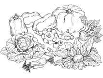 Översikter av olika grönsaker Royaltyfri Illustrationer