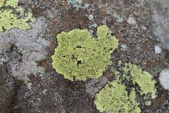 ÖversiktsLichen Rhizocarpon geographicum royaltyfri fotografi
