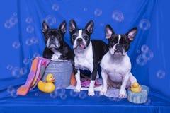 Översittare i badet royaltyfri fotografi