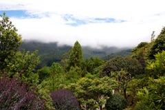 Överst av Cerro de Monserrate Arkivbild