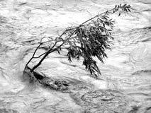 översvämma att motstå treen arkivfoton