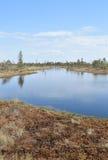 Översvämma landskap på vår - träd och översvämma vatten Arkivfoto