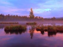 Översvämma med den fridsamma vattennivån i den mystiska skogen, ungt träd på ön i mitt Ny grön färg av örter och gräs Royaltyfri Bild