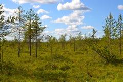 Översvämma och sörja träd Royaltyfria Bilder