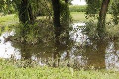 Översvämmad aktion Fotografering för Bildbyråer