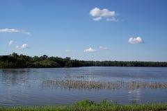 översvämmad cornfield Royaltyfria Foton