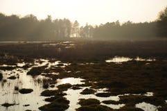 Översvämmad dimmig hed arkivfoton