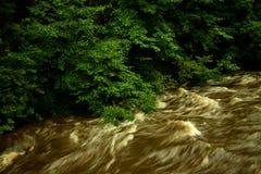 Översvämmad flod med stora träd Royaltyfri Fotografi