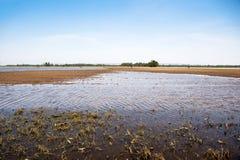 översvämmad jordbruksmark Royaltyfri Fotografi