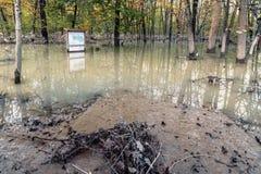 översvämmad skog Arkivbild