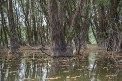 översvämmad skog Arkivfoton