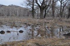 översvämmad skog i vår Arkivbilder
