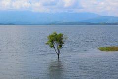 översvämmad tree arkivfoto