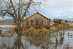 översvämmade bygdfält Arkivfoto