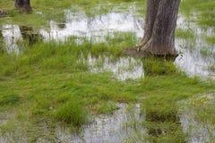 översvämmade fält Arkivfoton