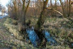 översvämmade fält Royaltyfria Bilder