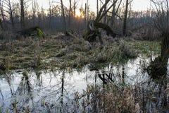 översvämmade fält Royaltyfria Foton
