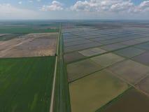 Översvämmade risfält Agronomiska metoder av att växa ris i fälten Arkivfoton