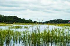 Översvämmade träsk South Carolina för det låga landet under grå molnig da Royaltyfri Bild