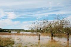 översvämmat fält Royaltyfri Fotografi