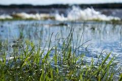 Översvämmat gräs Royaltyfria Foton