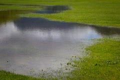 Översvämmat gräs Royaltyfri Fotografi