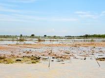 Översvämmat landskap på Tonlet Sap River arkivfoto