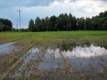 Översvämmat sädes- fält. Arkivbild