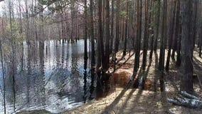 Översvämningsflod arkivfilmer