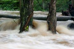översvämningshiberniapark Fotografering för Bildbyråer