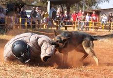 Övervaka den utbildade elsassiska hunden, den tagande vadderade rinnande mannen ner i sho Royaltyfri Bild