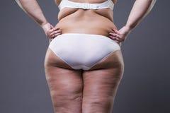 Överviktig kvinna med fettben och bakdelar, kvinnlig kropp för fetma royaltyfria bilder