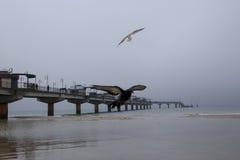 Övervintra aftonen på pir i Miedzyzdroje med fåglar Royaltyfria Bilder