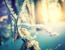 Övervintra bakgrund, frostig skogtextur av snön på solnedgången royaltyfria foton