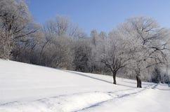 Övervintra banan efter det första snöfallet av säsongen Fotografering för Bildbyråer