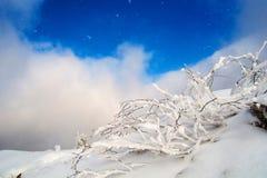 Övervintra berg Arkivbild
