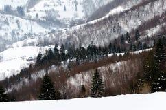Övervintra bergsikten på gryningträstaketet i snö, slösa, göra grön t Royaltyfria Bilder
