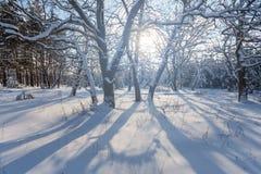 Övervintra den insnöade skogen i strålar av solen Royaltyfri Fotografi