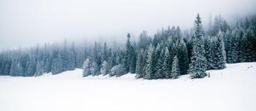 Övervintra den vita skogen med snö, julbakgrund royaltyfri bild