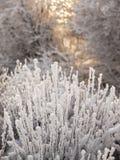Övervintra det molniga landskapet med frost på filialer av träden Royaltyfri Foto